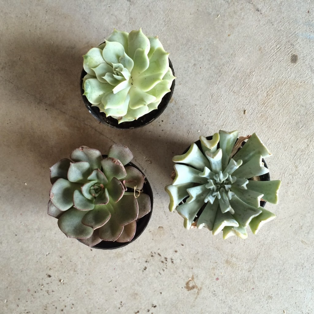 DIY Terrarium // Like The Yogurt blog